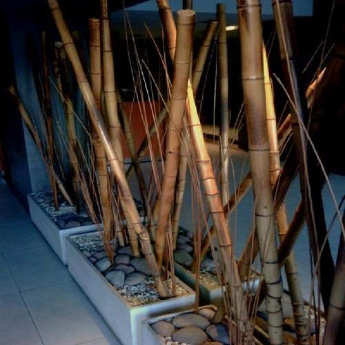Vivero bambu venta de plantas y macetas - Canas de bambu decoracion ...