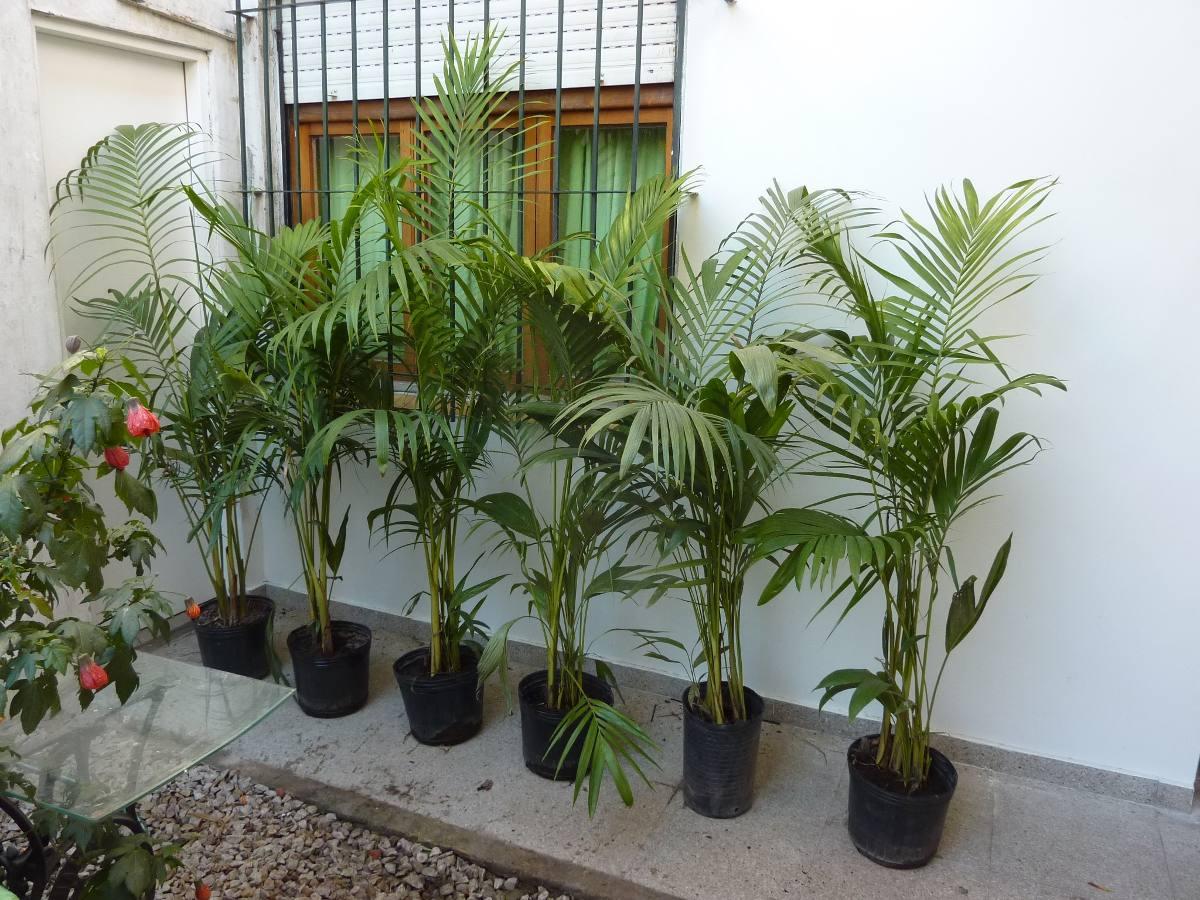 Vivero El Bamb Venta De Plantas Y Macetas